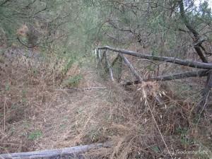 Scalinata originale del sentiero e ormai in disuso