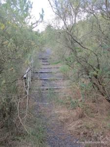 Seconda scalinata, pressoché abbandonata anch'essa in favore di un sentiero parallelo