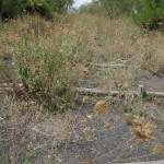 Scalinata sul percorso n°1/n°2, (quello di sinistra)