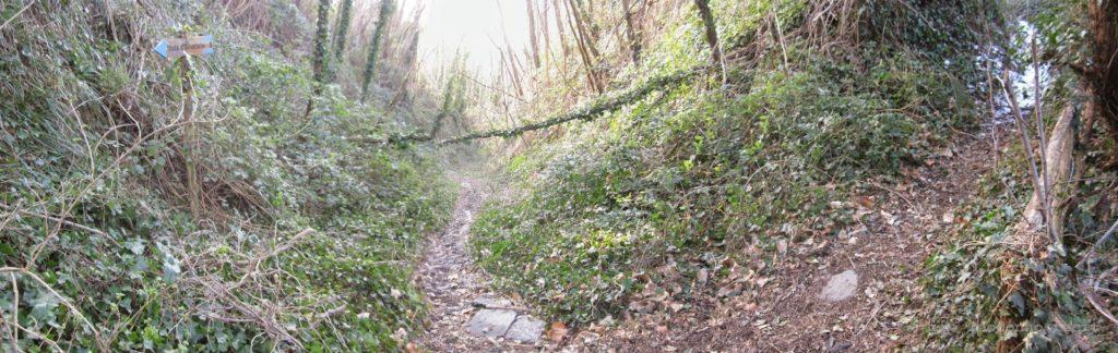 Apice del sentiero n°8 e incrocio con il sentiero alternativo (dx)