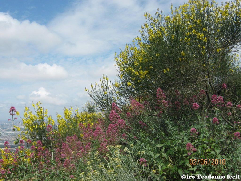 Le essenze floreali vesuviane